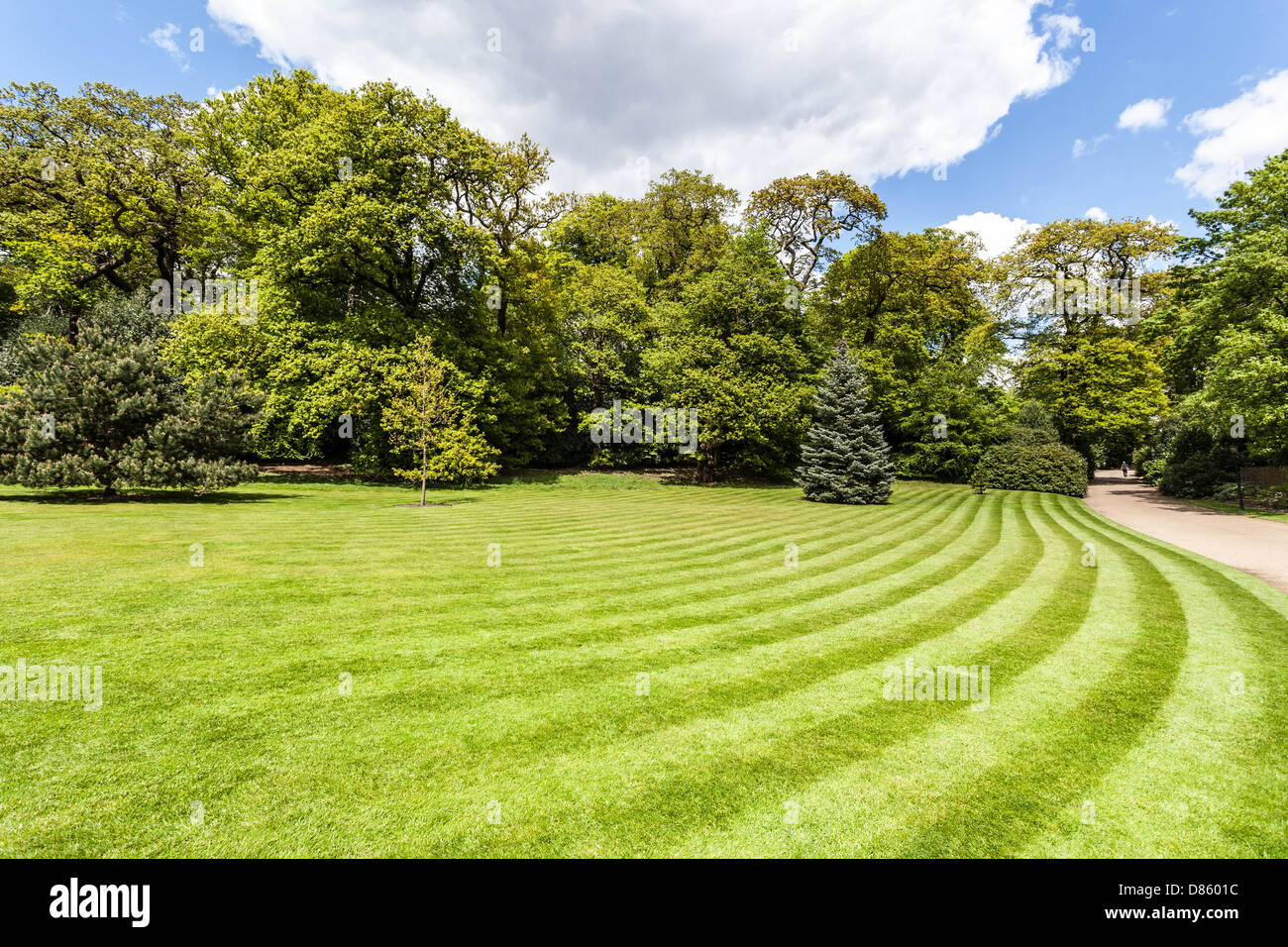 Green lawn with mown stripes, Hampstead Heath, London, England, UK - Stock Image