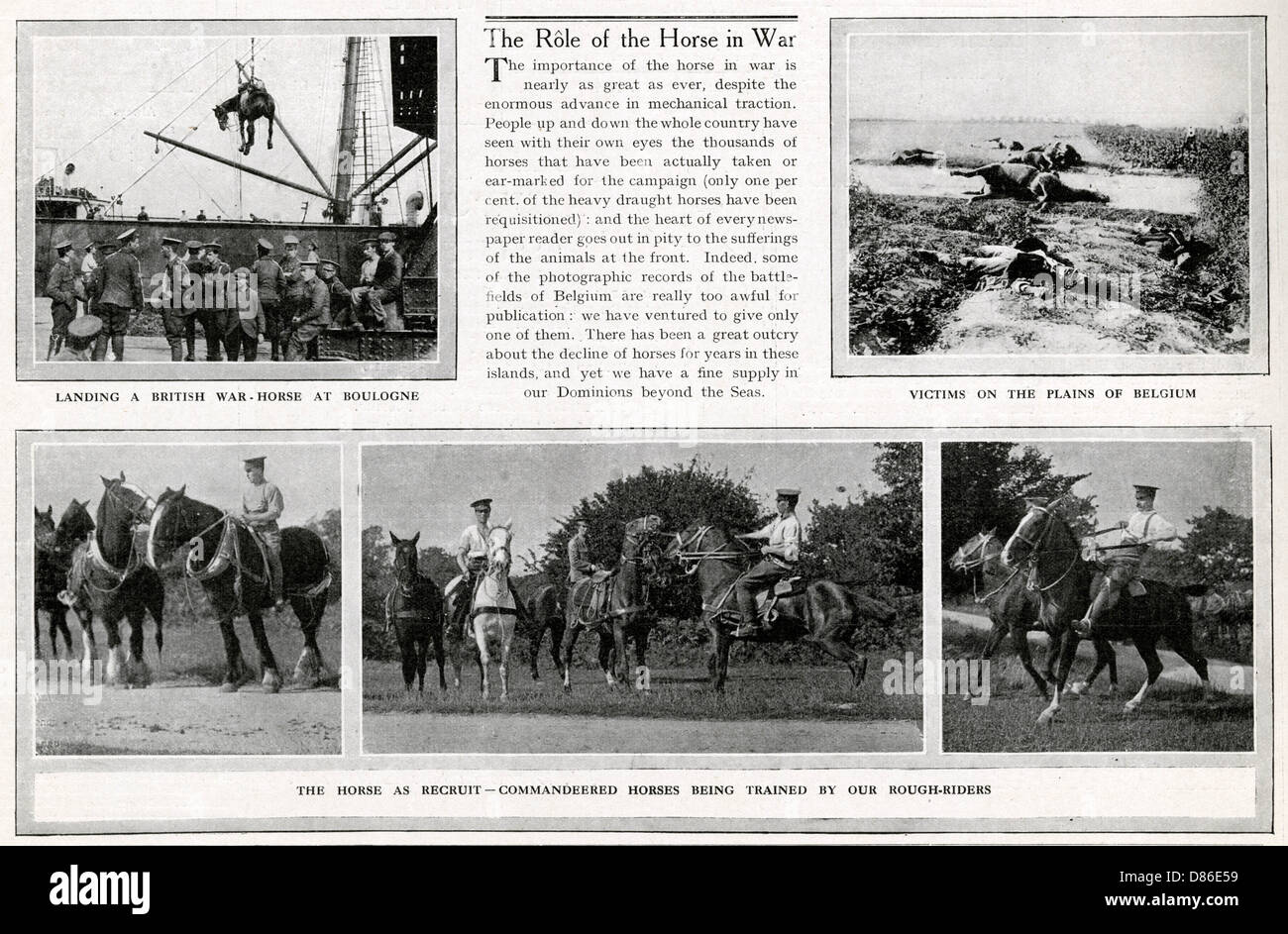 The Role Of The Horses In Wwi 1914 - Stock Image
