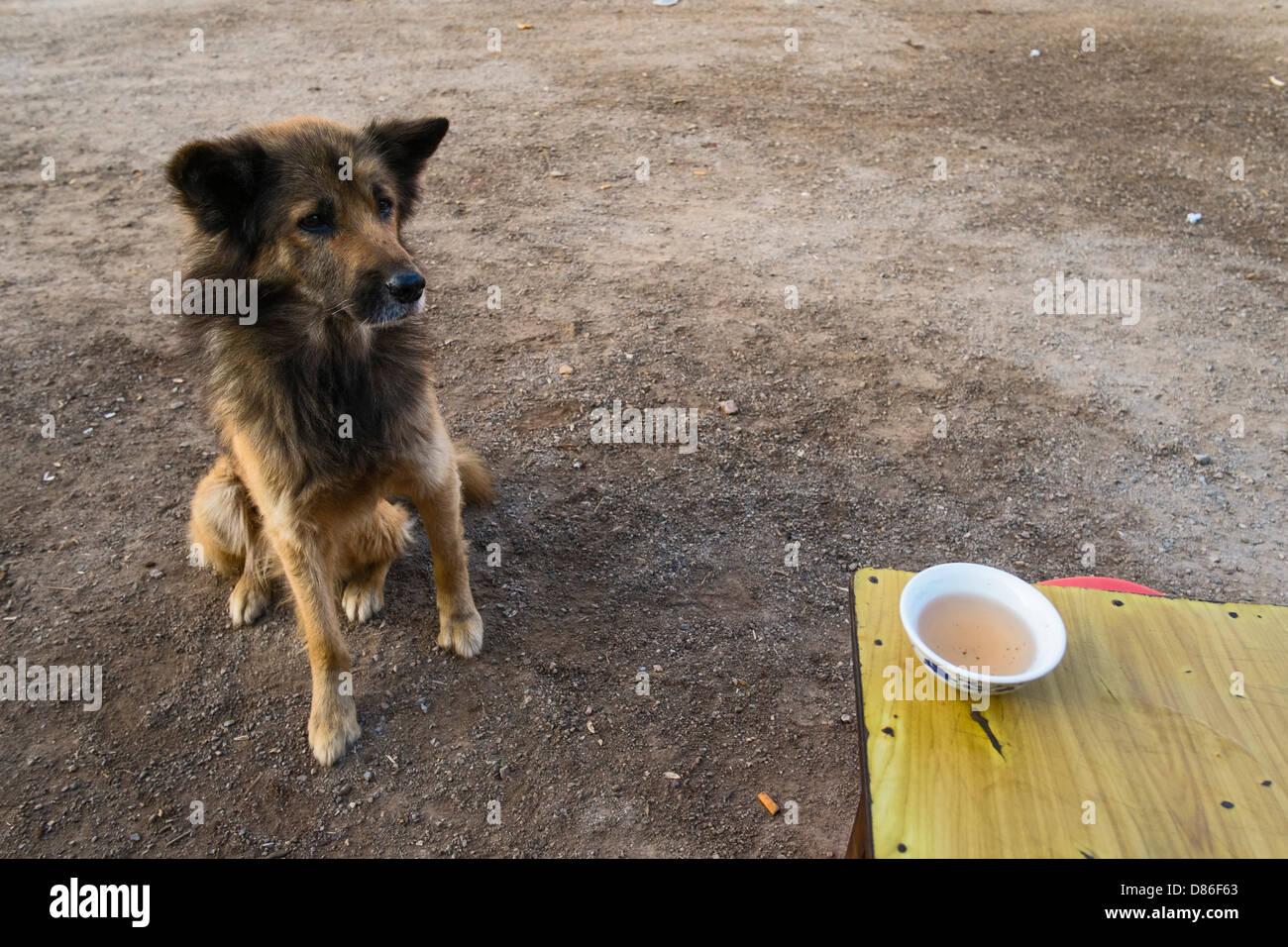 Begging dog, Shwe Nyaung, Myanmar, Asia - Stock Image