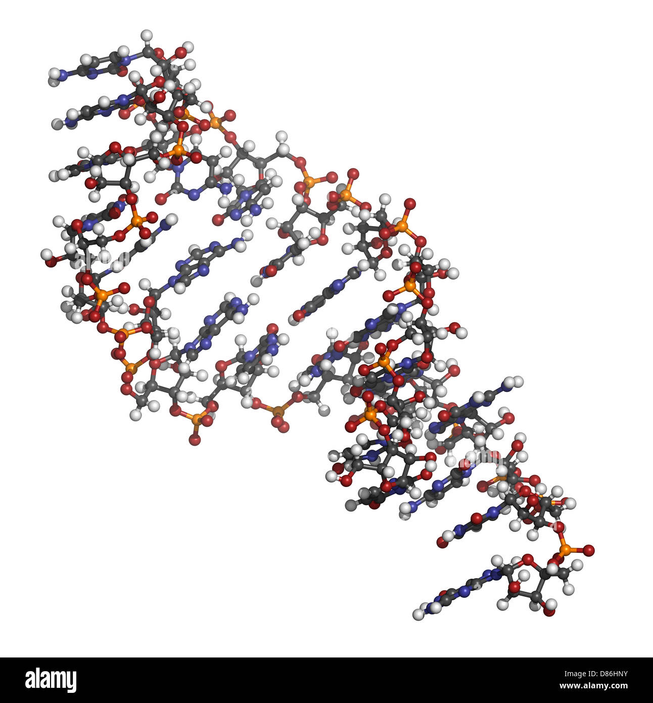 Micro RNA (miRNA, hsa-miR-133a) structure, computer model. MiRNA is non-coding RNA that has gene regulatory functions. - Stock Image
