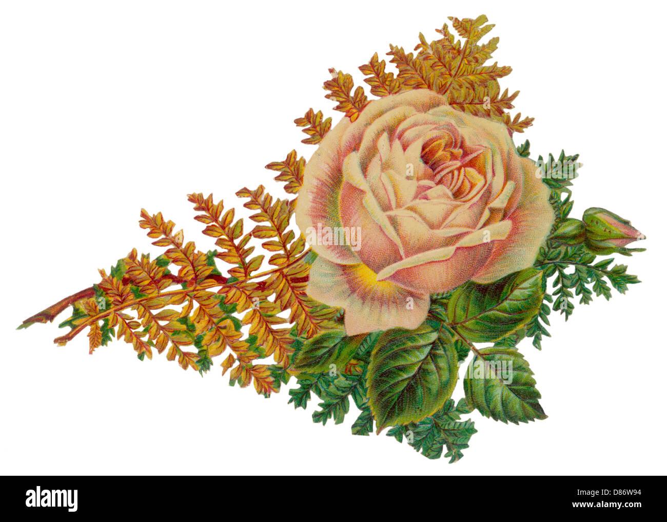 Rose Scrap - Stock Image