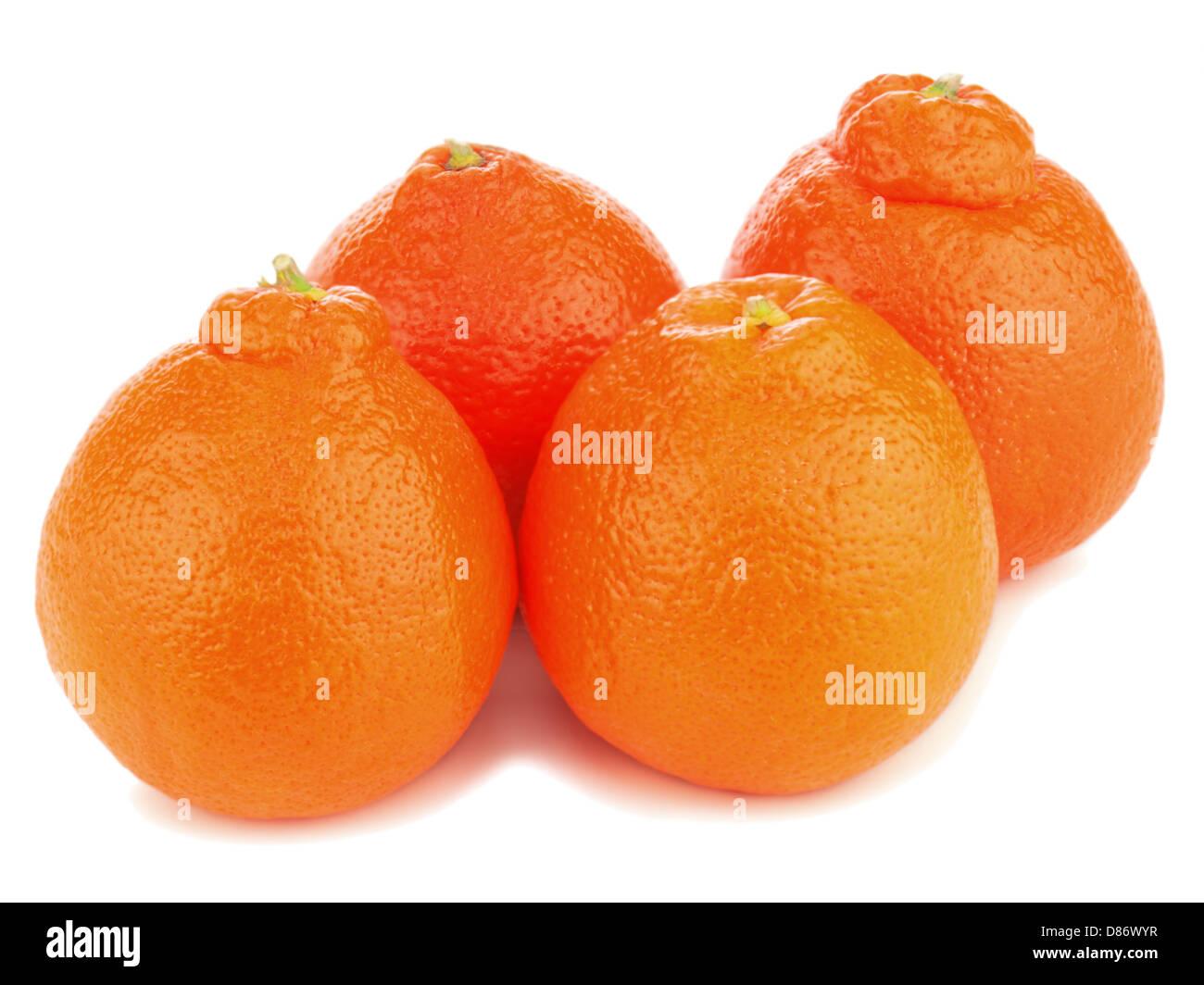Ripe mineola fruits isolated on white background. Closeup. - Stock Image