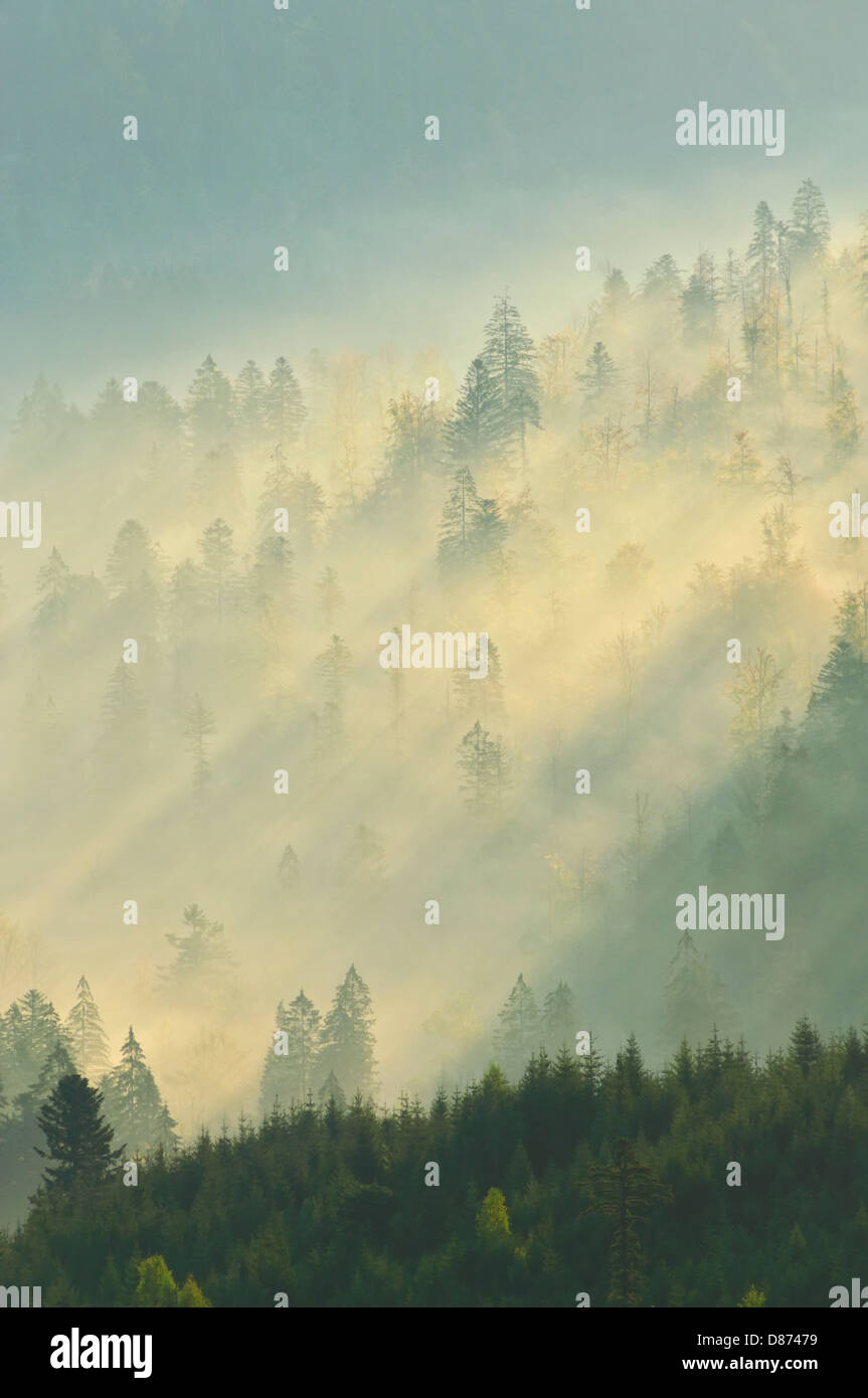 Germany, View of Upper Murg Valley and Black Forest near Baiersbronn - Stock Image