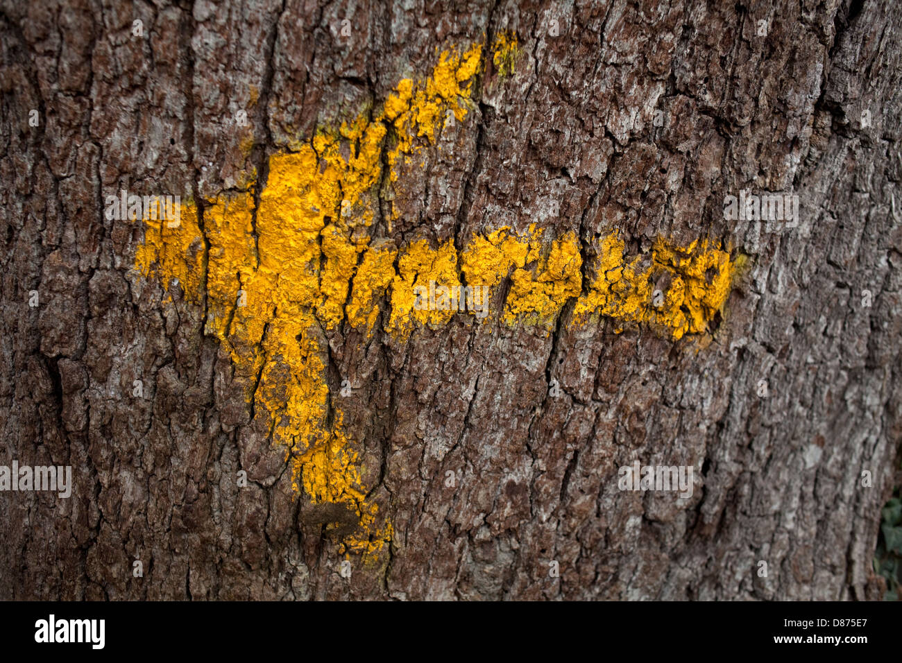 Yellow arrow showing the direction of the Way of St. James - Stock Image