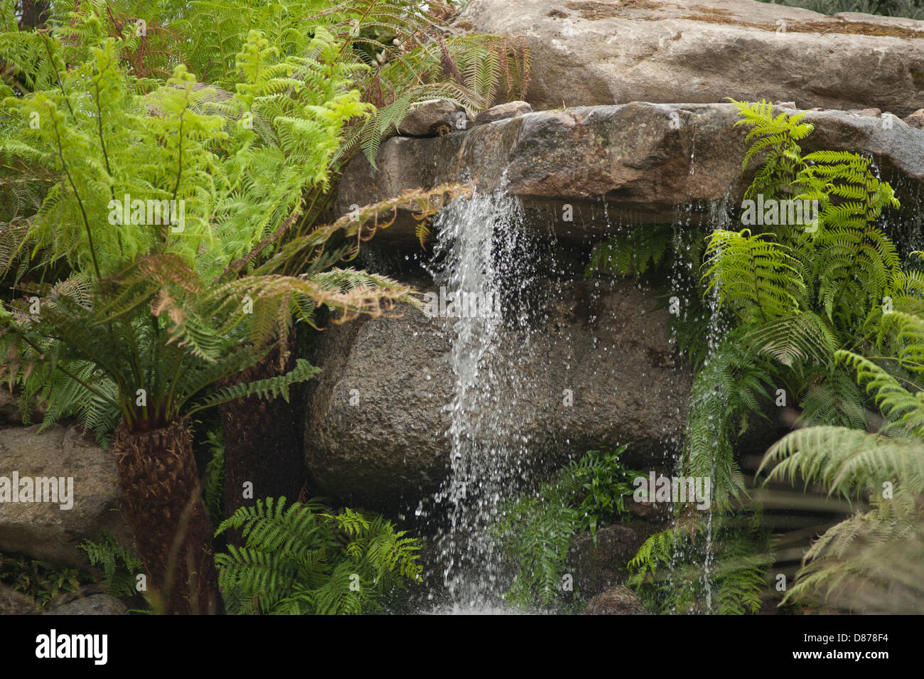 London, UK. 20th May 2013. Waterfall with ferns on Trailfinders Australian Garden by Flemings at the RHS Chelsea - Stock Image