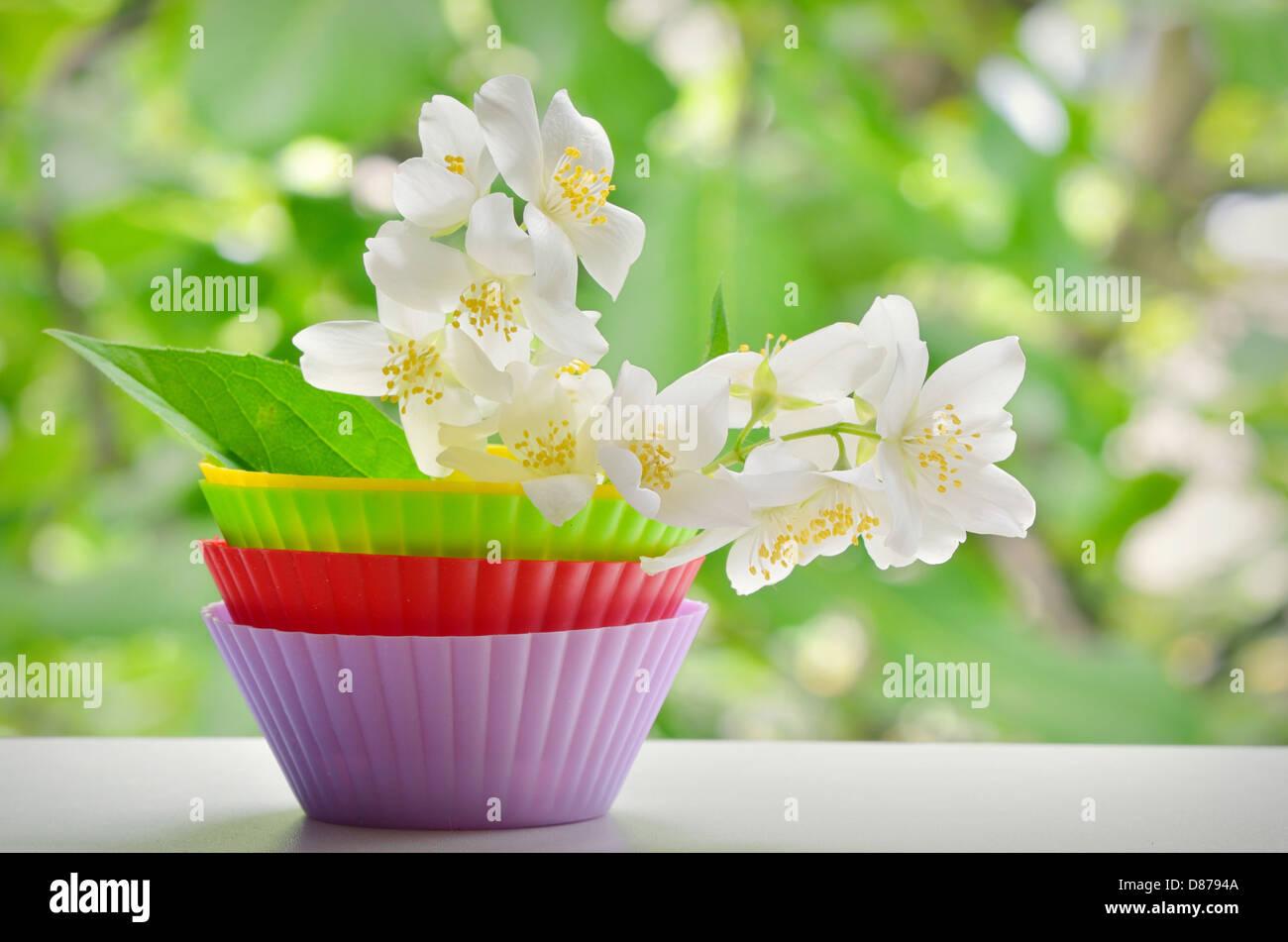 White Jasmine Flower shoot on window frame - Stock Image