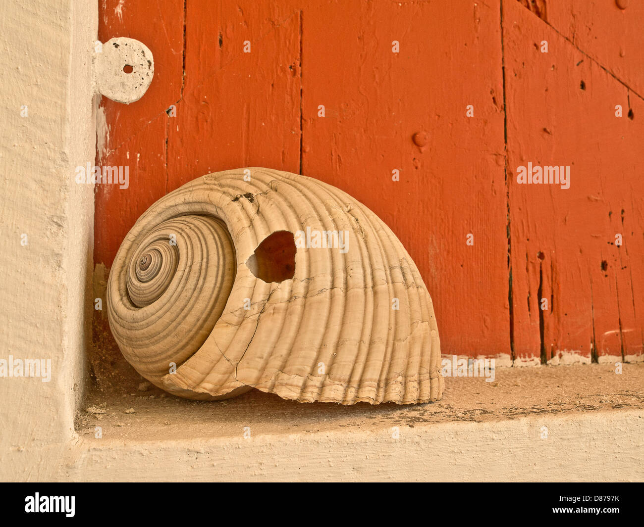 Huge sea snail shell,  shell from large sea mollusk in front door of Greek house - Stock Image