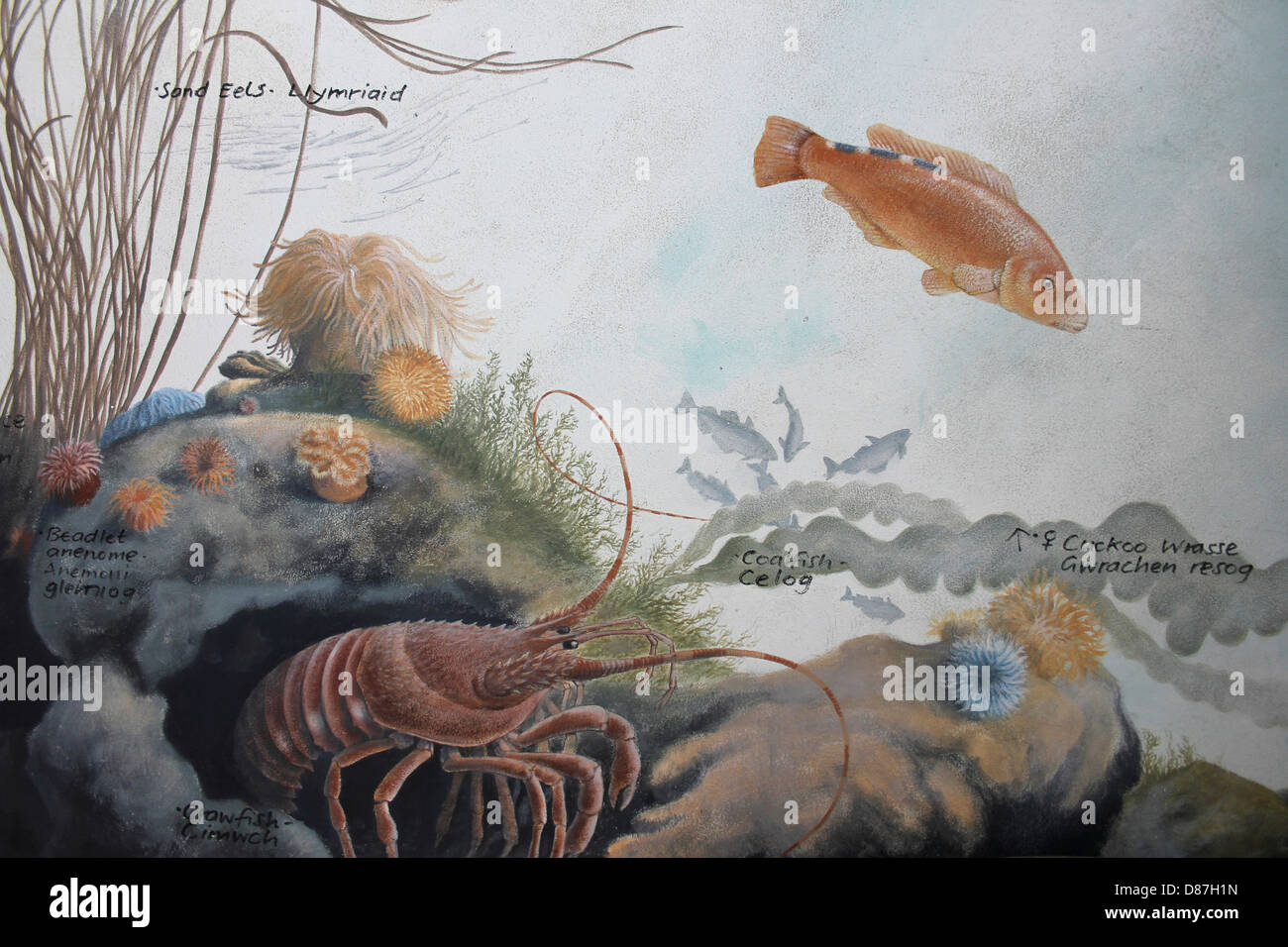 Painting Depicting Marine Life In The Irish Sea - Stock Image