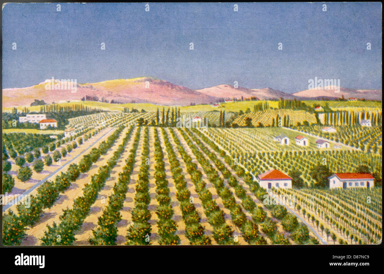 Israeli Orange Grove 30s - Stock Image