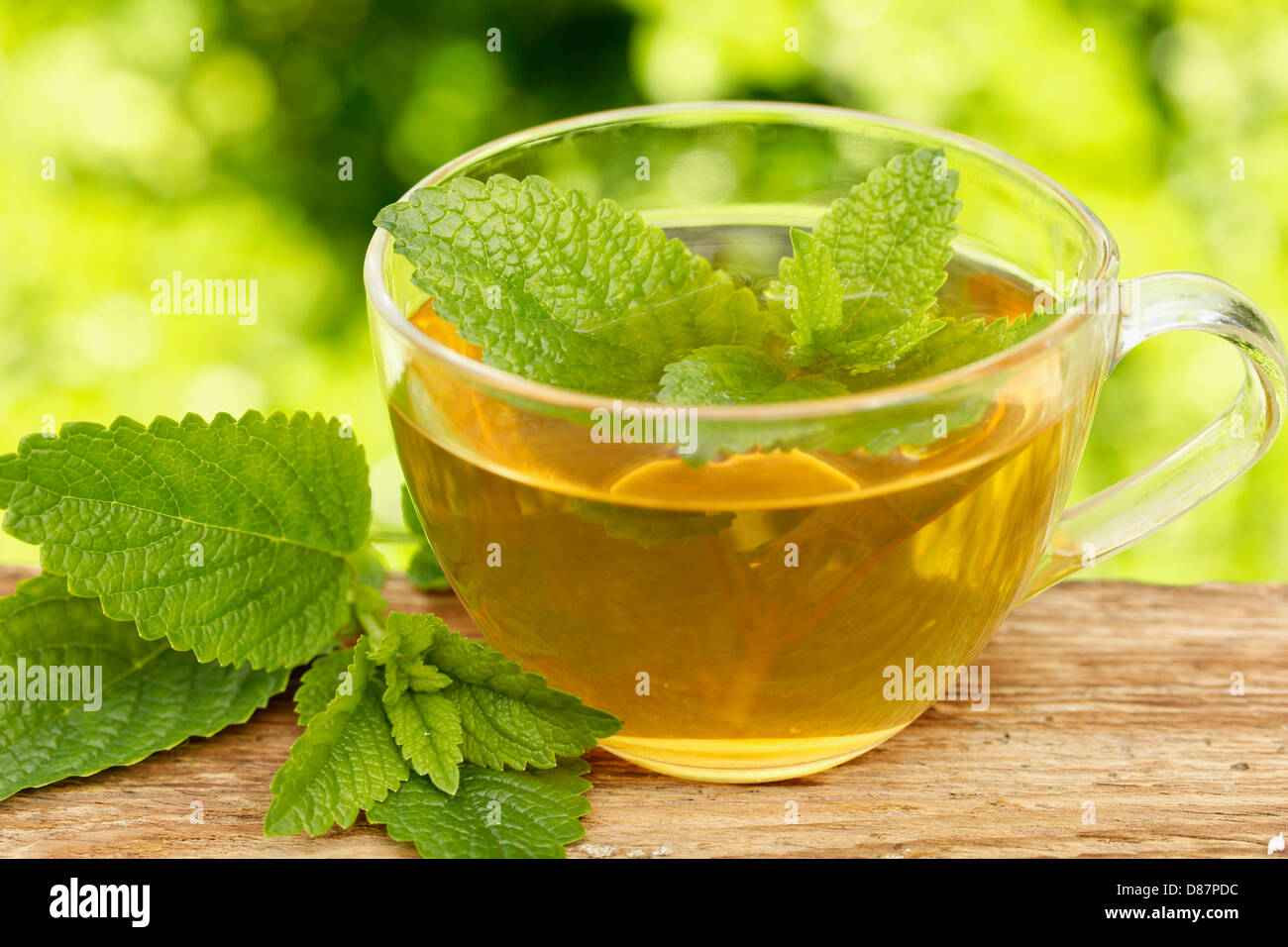 Is it possible to drink melissa tea during pregnancy 13