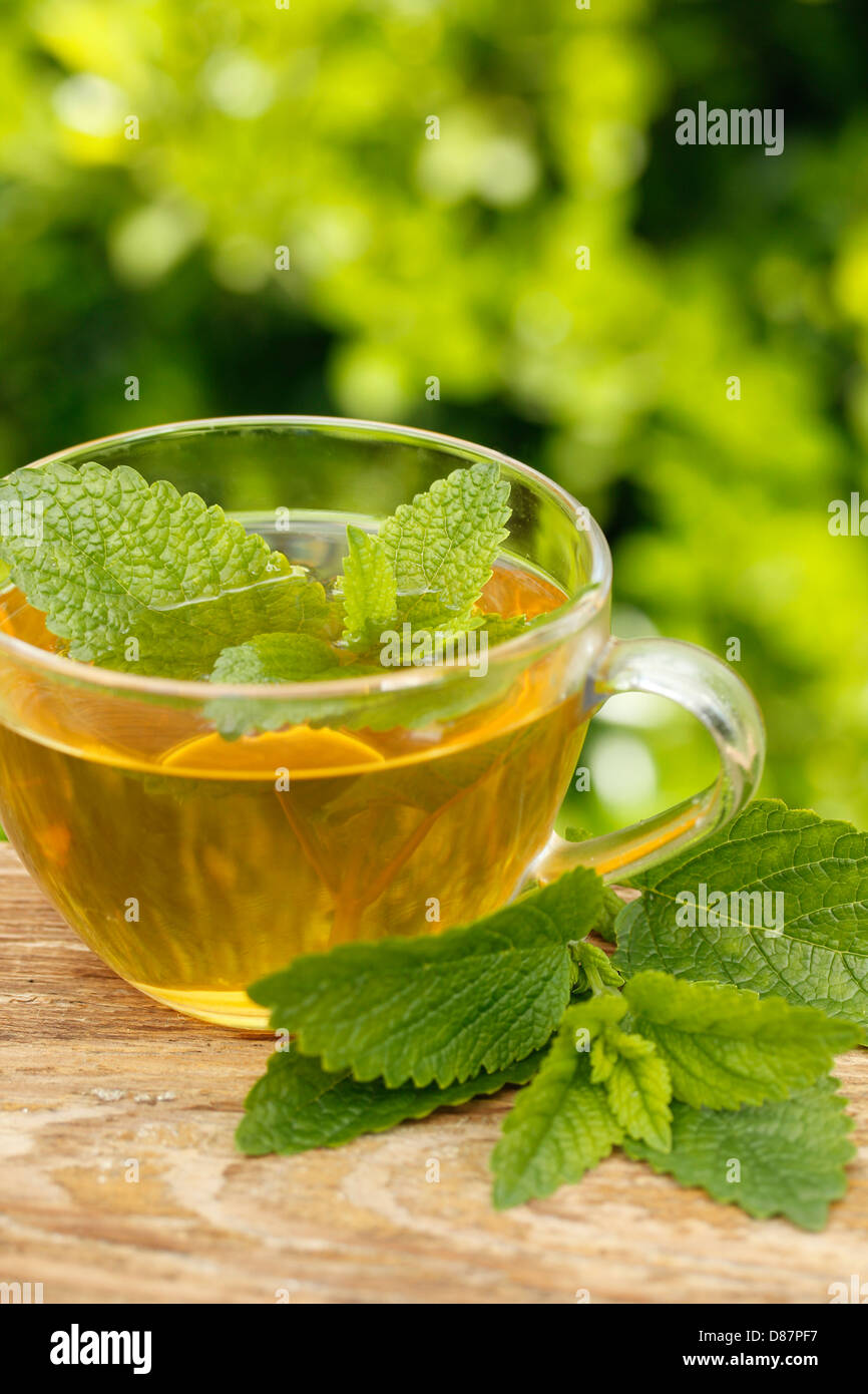 Lemon balm tea. Melissa officinalis Stock Photo
