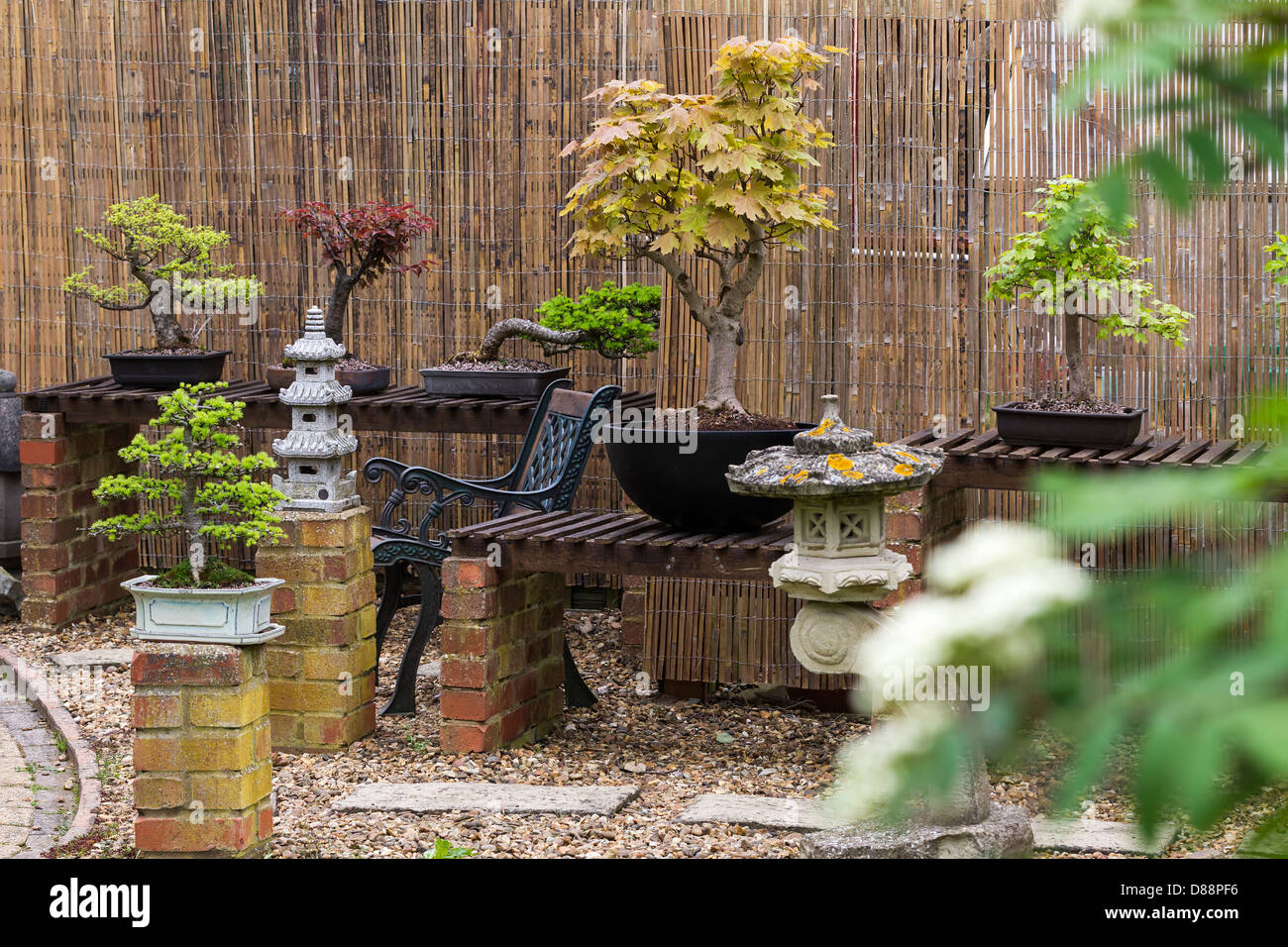 Bonsai Display Stock Photos & Bonsai Display Stock Images - Alamy