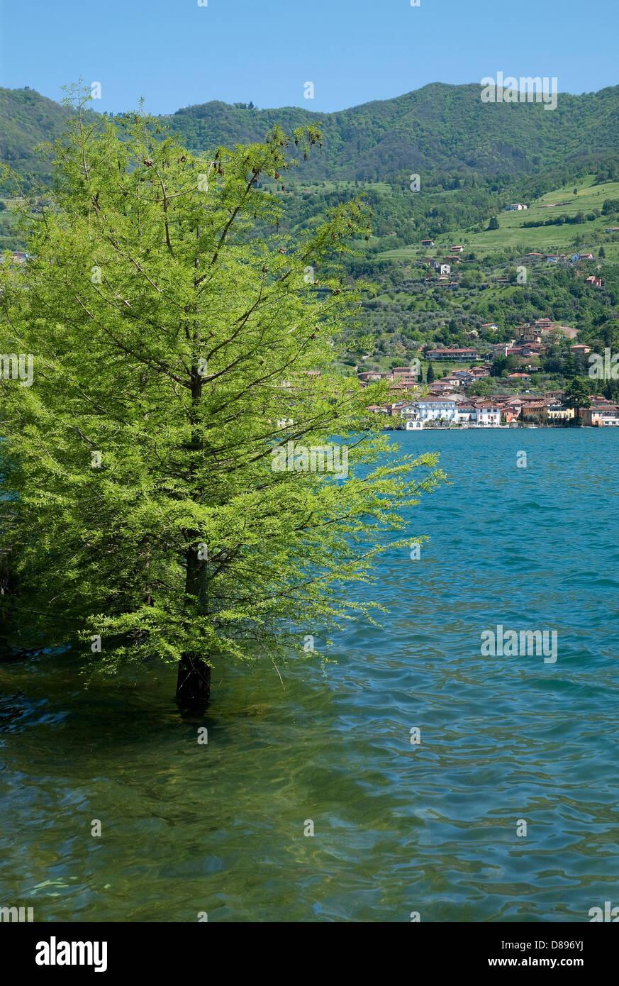 peschiera maraglio, monte isola, lake iseo, lombardy, italy - Stock Image