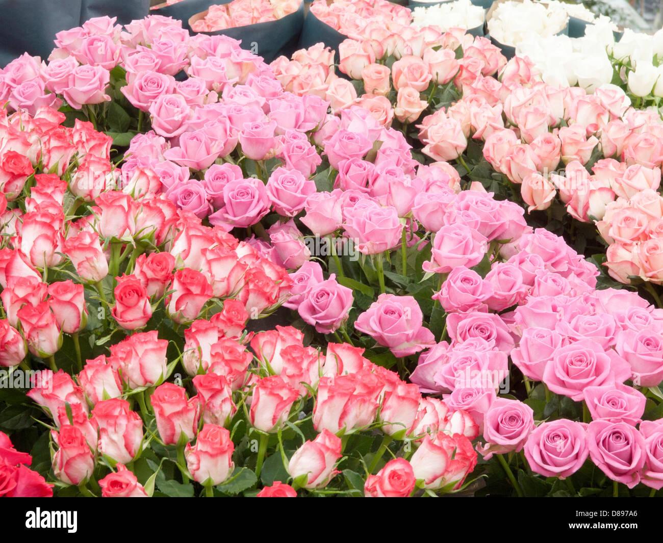 Spencer house london stock photos spencer house london stock roses from kenya just for marks and spencer izmirmasajfo