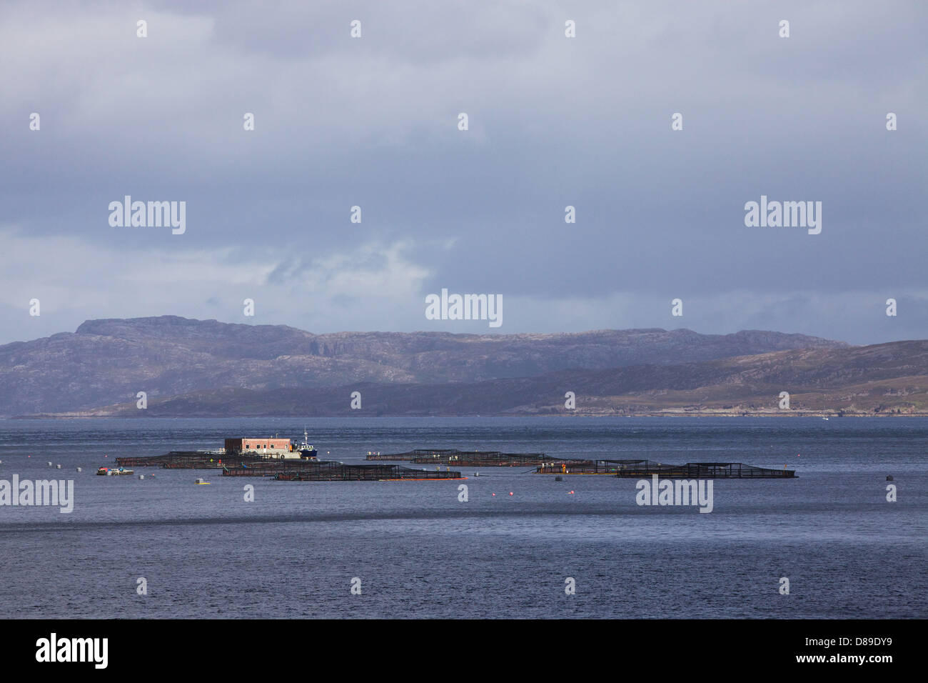 Salmon fishing in ten 32 metre cages owned by the Scottish Salmon Company. Portree Bay, Isle of Skye, Inner Hebrides, - Stock Image