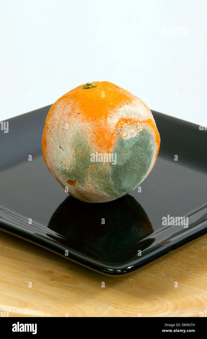 rotten fruit, mouldy orange cut open - Stock Image