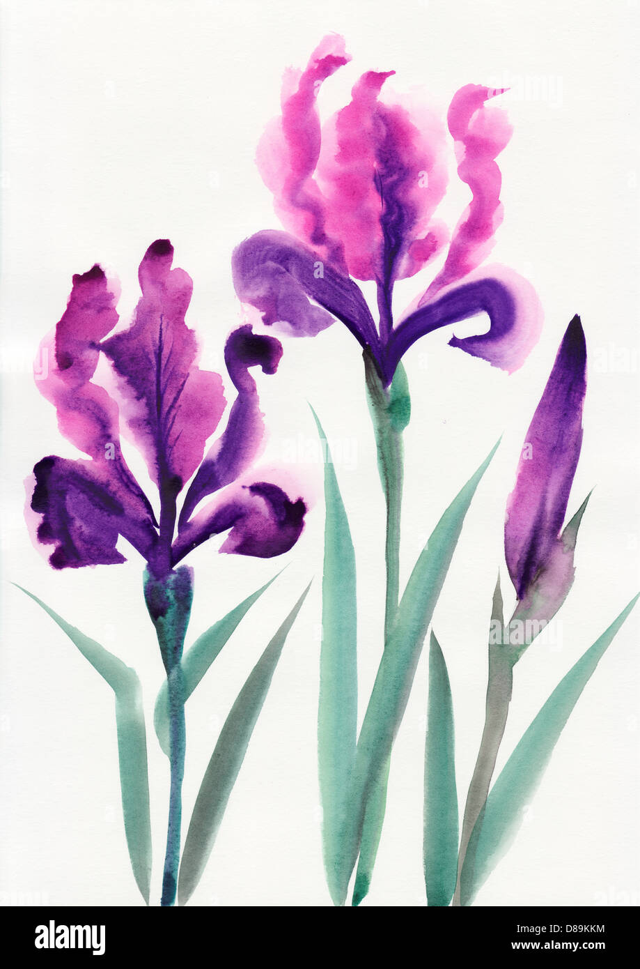 Iris flowers original watercolor painting stock photo 56761368 alamy iris flowers original watercolor painting izmirmasajfo