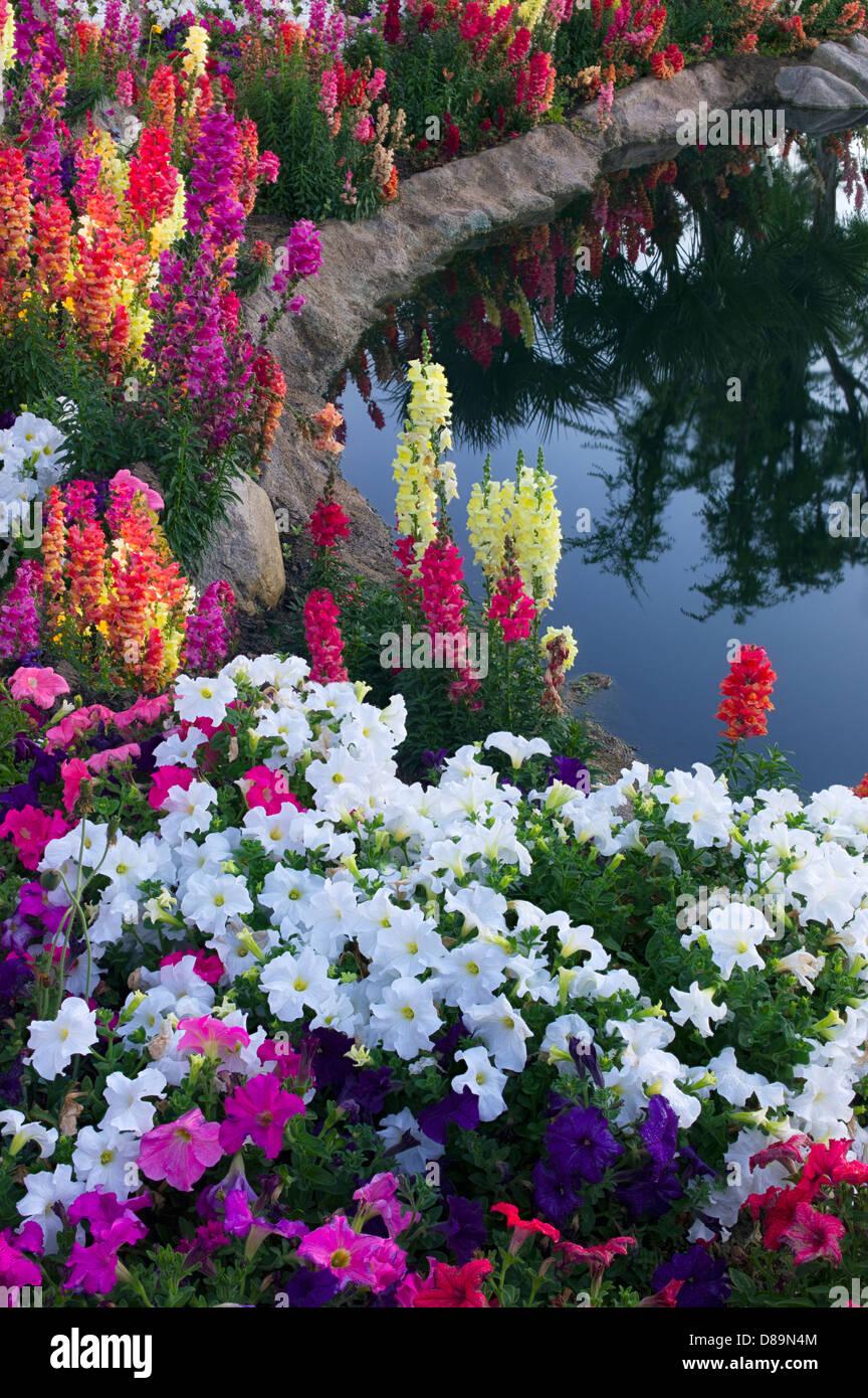 Flower garden at pond side. Palm Desert, California Stock Photo