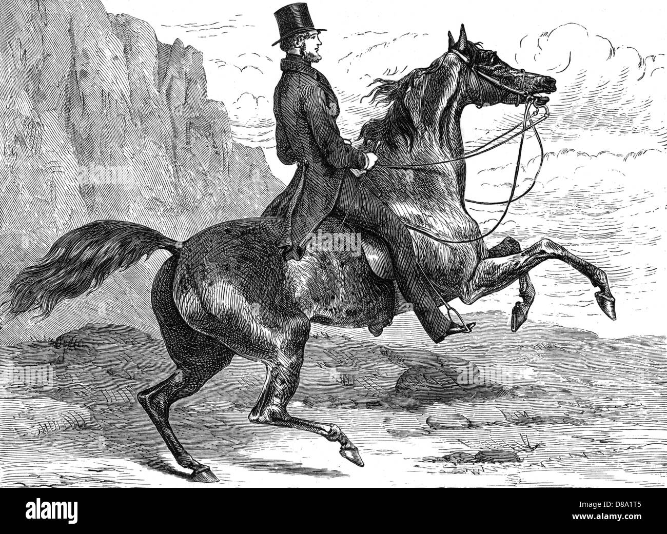 Count Dorsay Riding - Stock Image