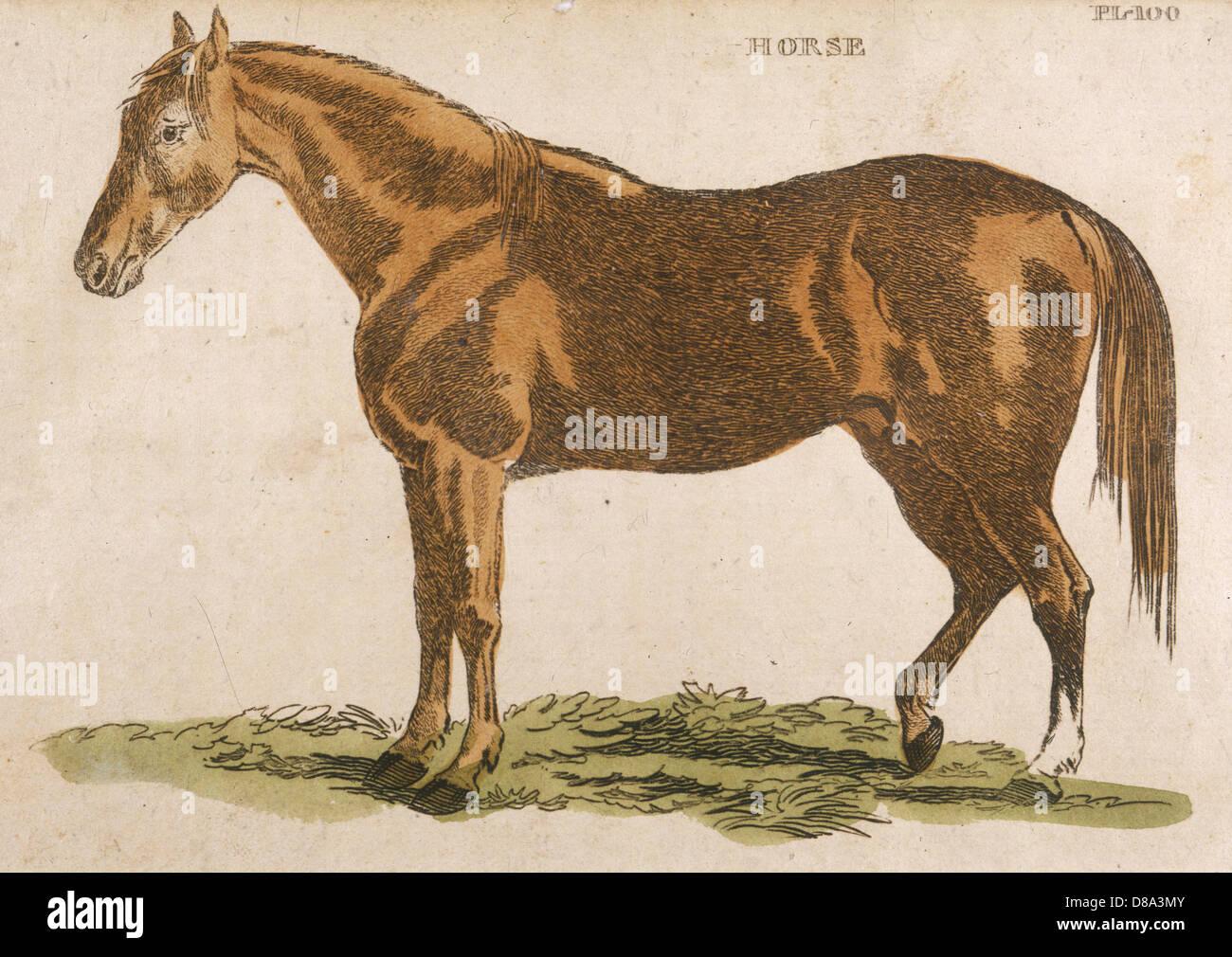 Horse Brightly 1811 - Stock Image