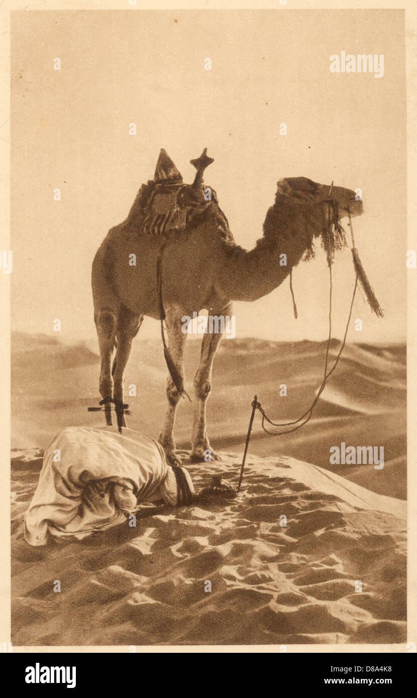 Camel Praying Man 1920 - Stock Image