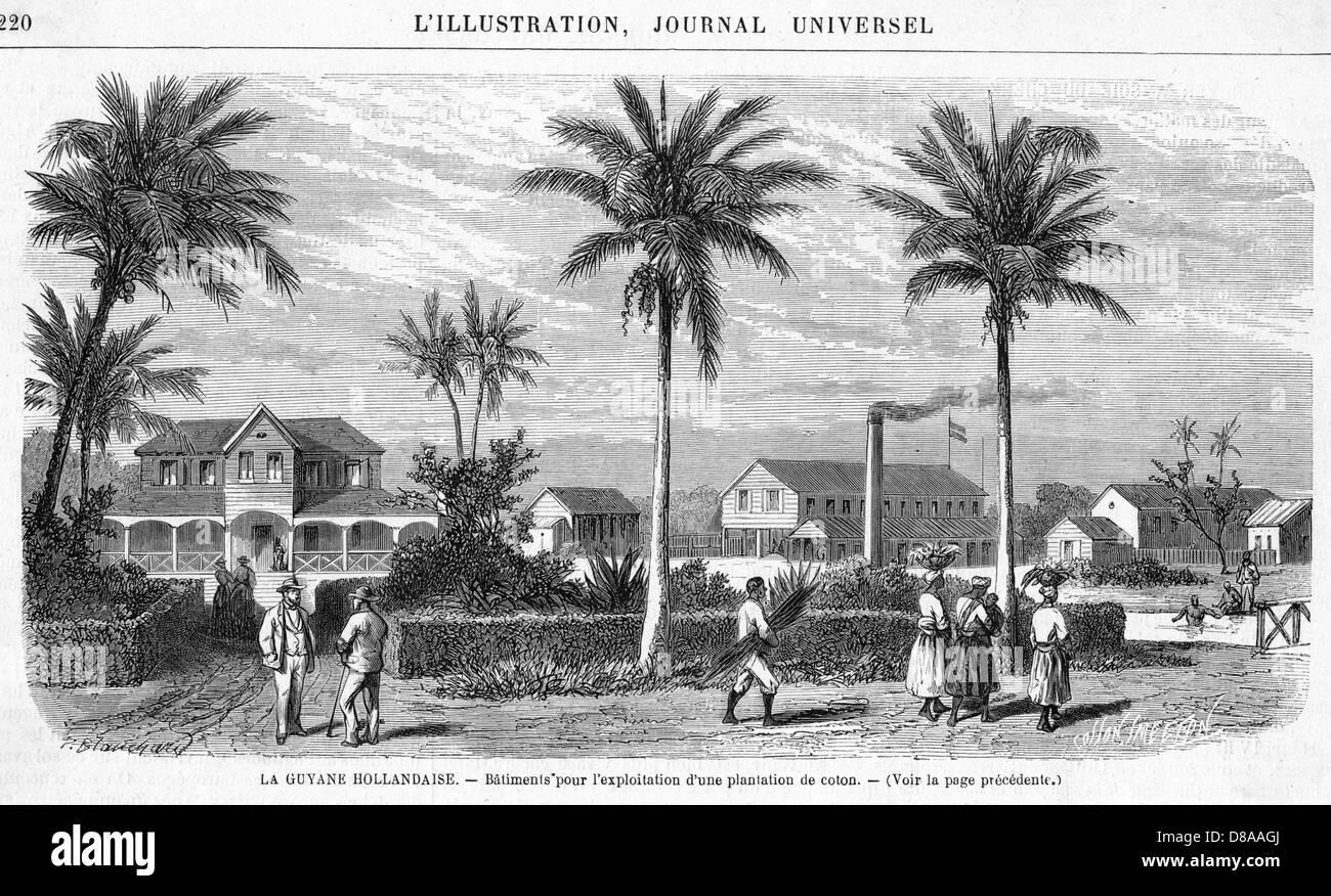 Suriname Plantation - Stock Image