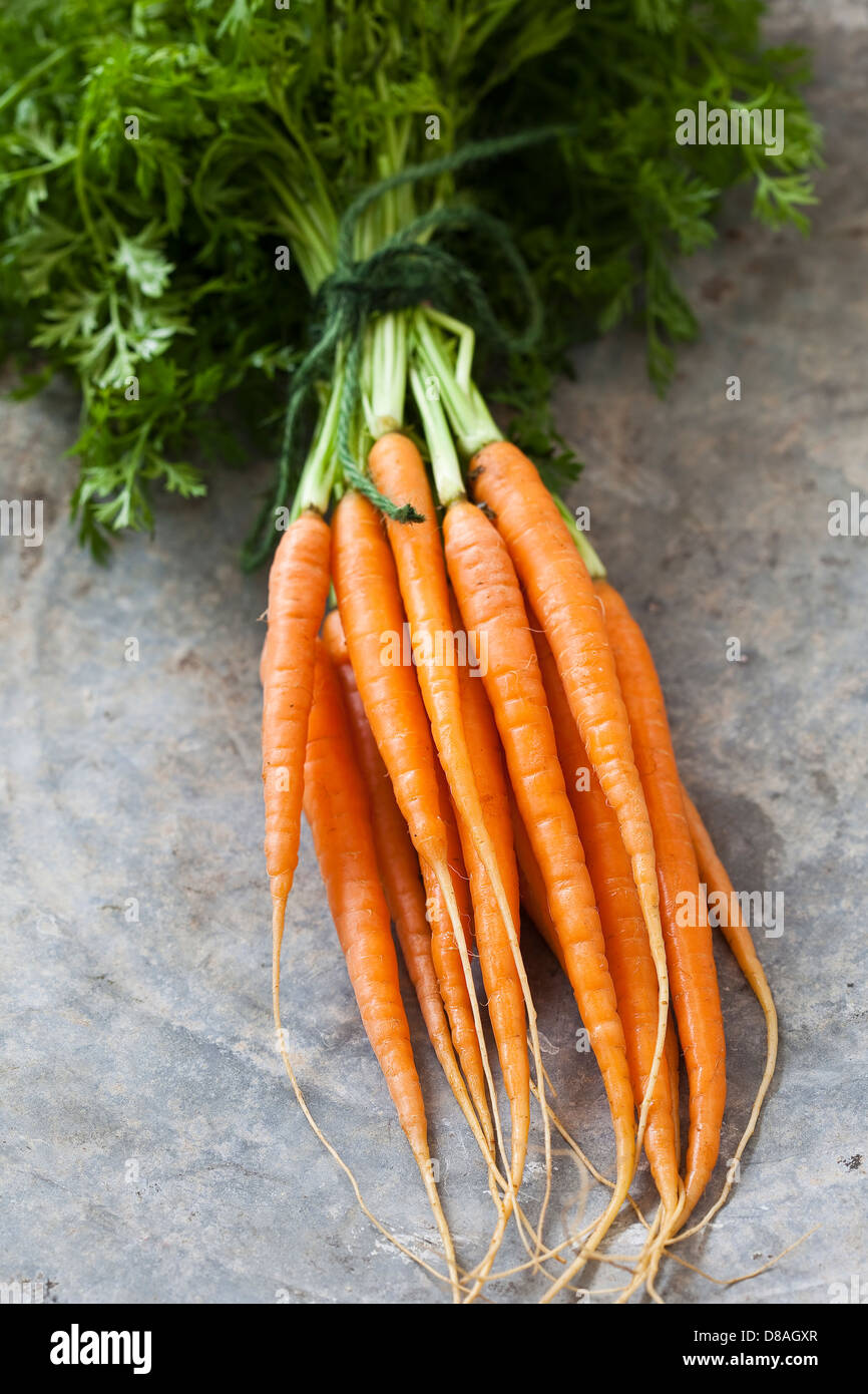 A bunch of fresh Dutch carrots with green tops still attached, tied together with green string and on a stone surface. - Stock Image
