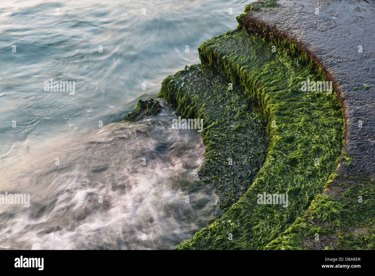 Venice, Italy. The sea washing over weed-covered steps - Stock Image