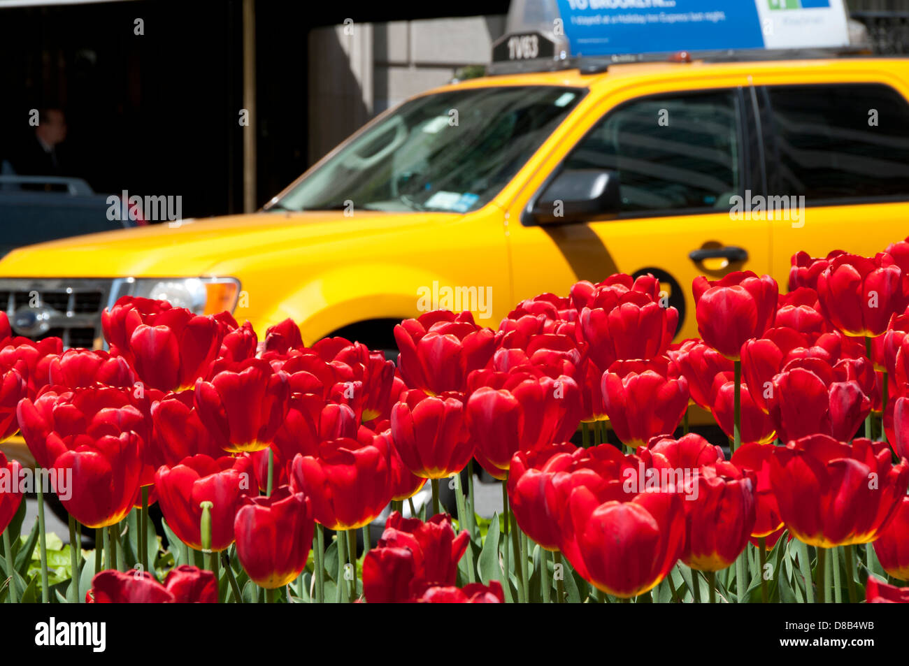red tulips median NYC taxi taxicab - Stock Image