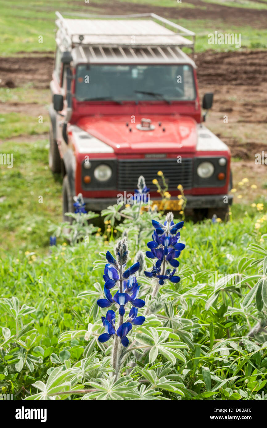 Fields Land Rover >> Golan Heights Israel A Red Land Rover Jeep Parked Between