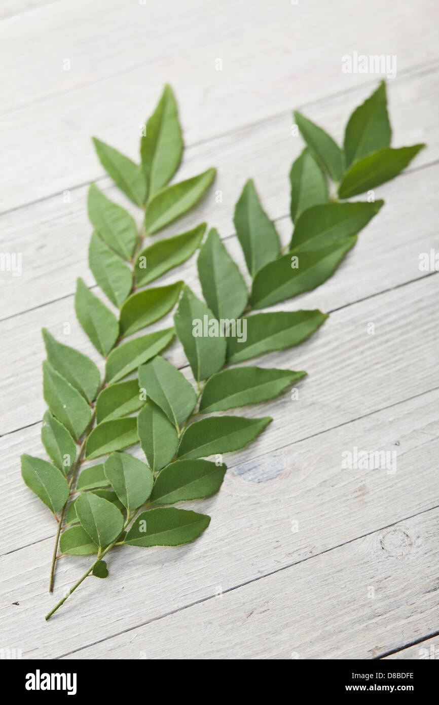 Two fresh sprigs of curry tree leaves on a rustic wood surface. - Stock Image