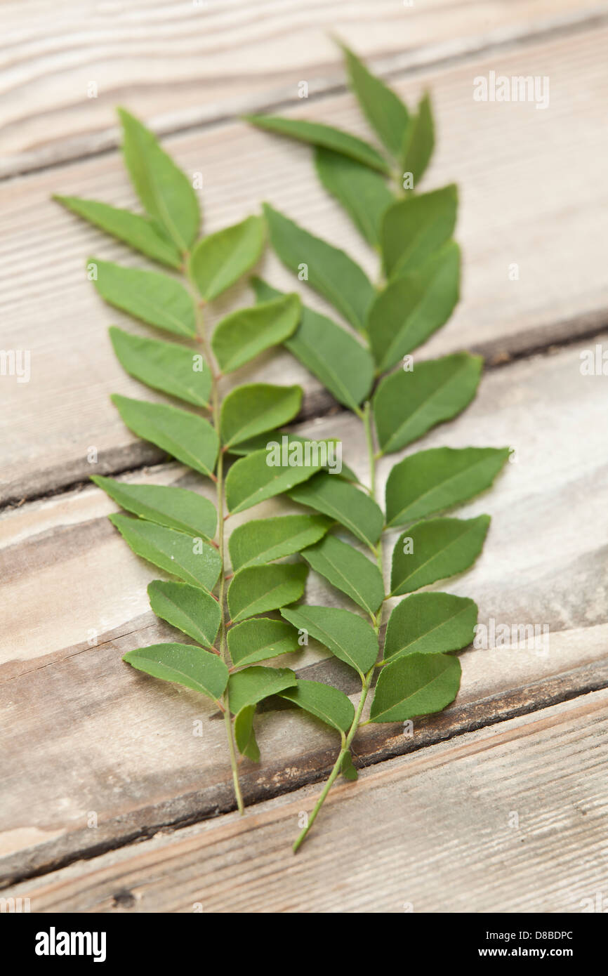 Two sprigs of fresh curry tree leaves on a sanded wood table. - Stock Image