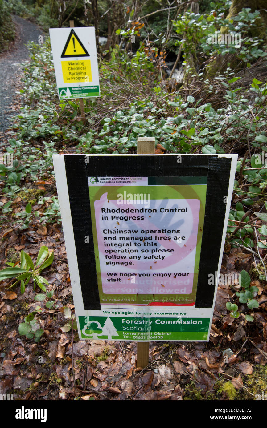Scottish forestry signs warning the public of chemical and chainsaw use to control Rhododendron invasion. - Stock Image