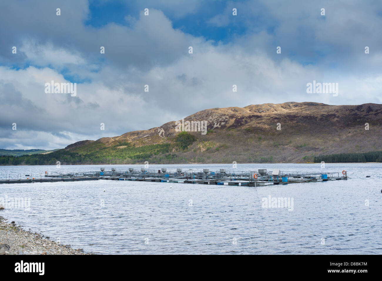 Salmon farm, rearing pens, on Loch Ba on the Benmore Estate, Isle of MUll - Stock Image