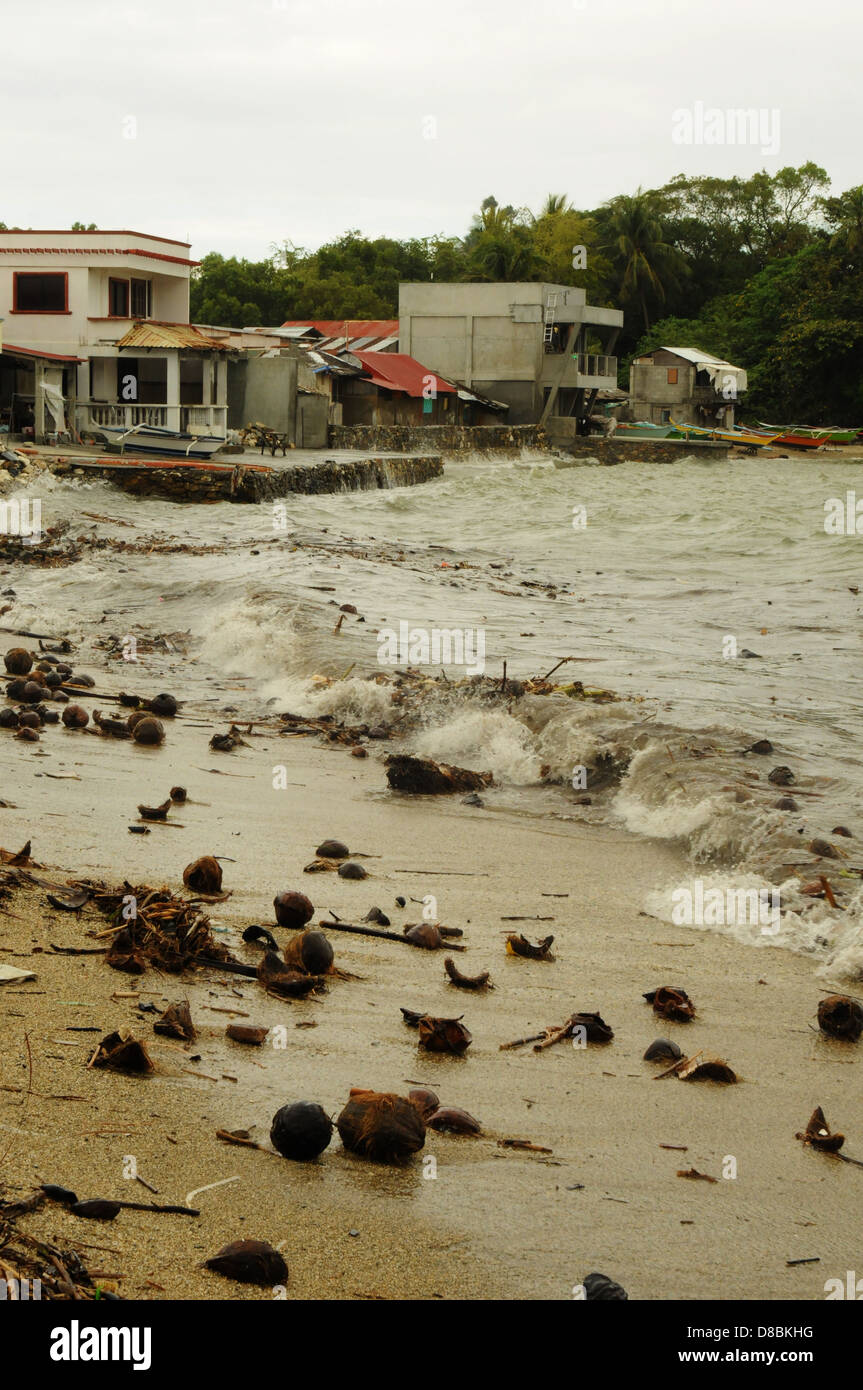 Coconuts on the shore in the coastal town of Puerto Galera. Stormy weather on Mindoro Island, Philippines - Stock Image
