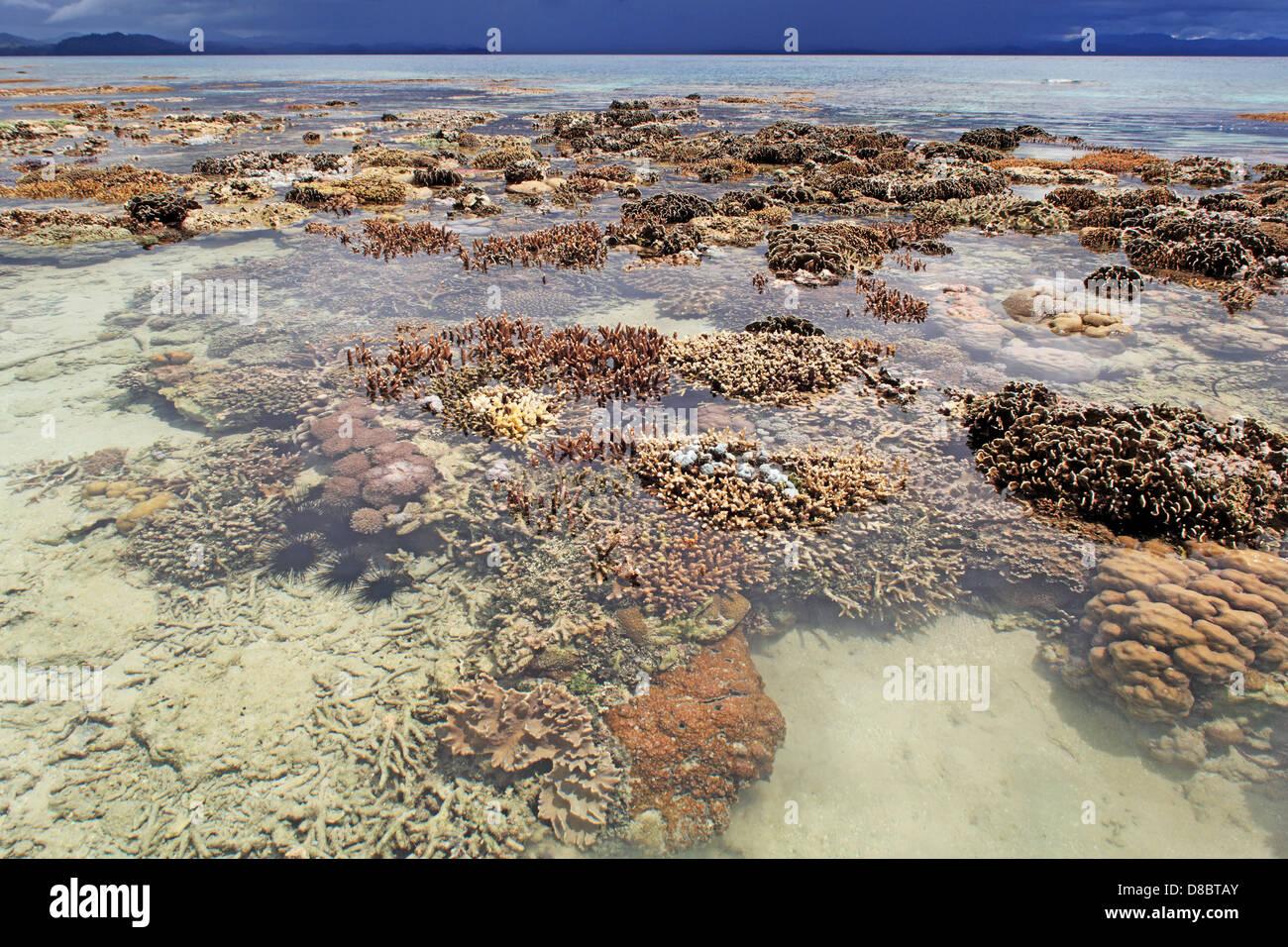 coral reef at Bangka Island, North Sulawesi, Indonesia - Stock Image