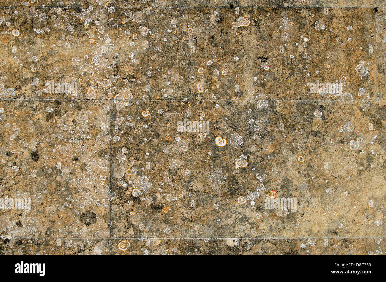 Lichen on weathered stone wall - Stock Image