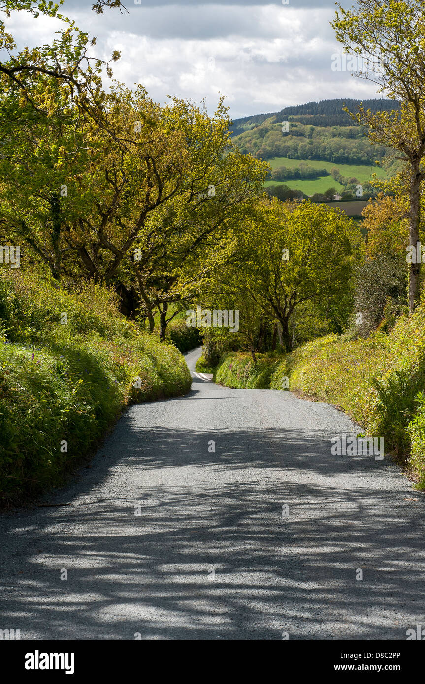 Hedgerows fields and lane,Devon - Stock Image
