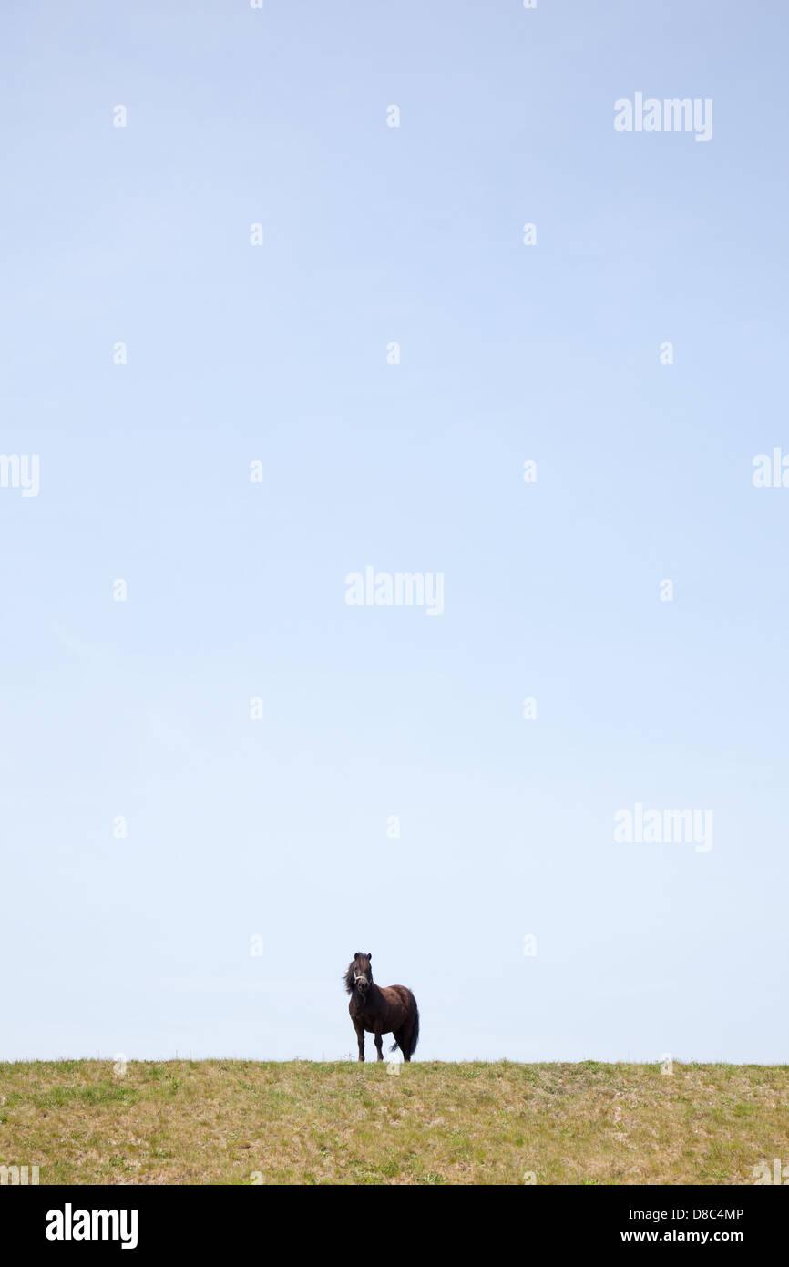 silhouet van een pony op een dijk steekt af tegen de blauwe lucht Stock Photo