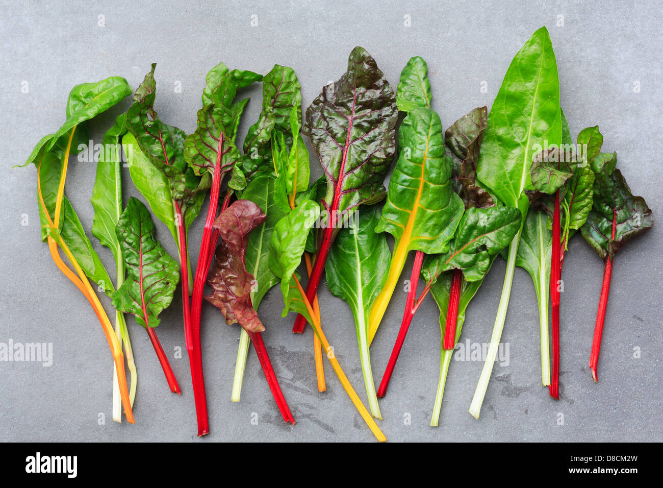 Rainbow Chard Leaves Stock Photo Alamy