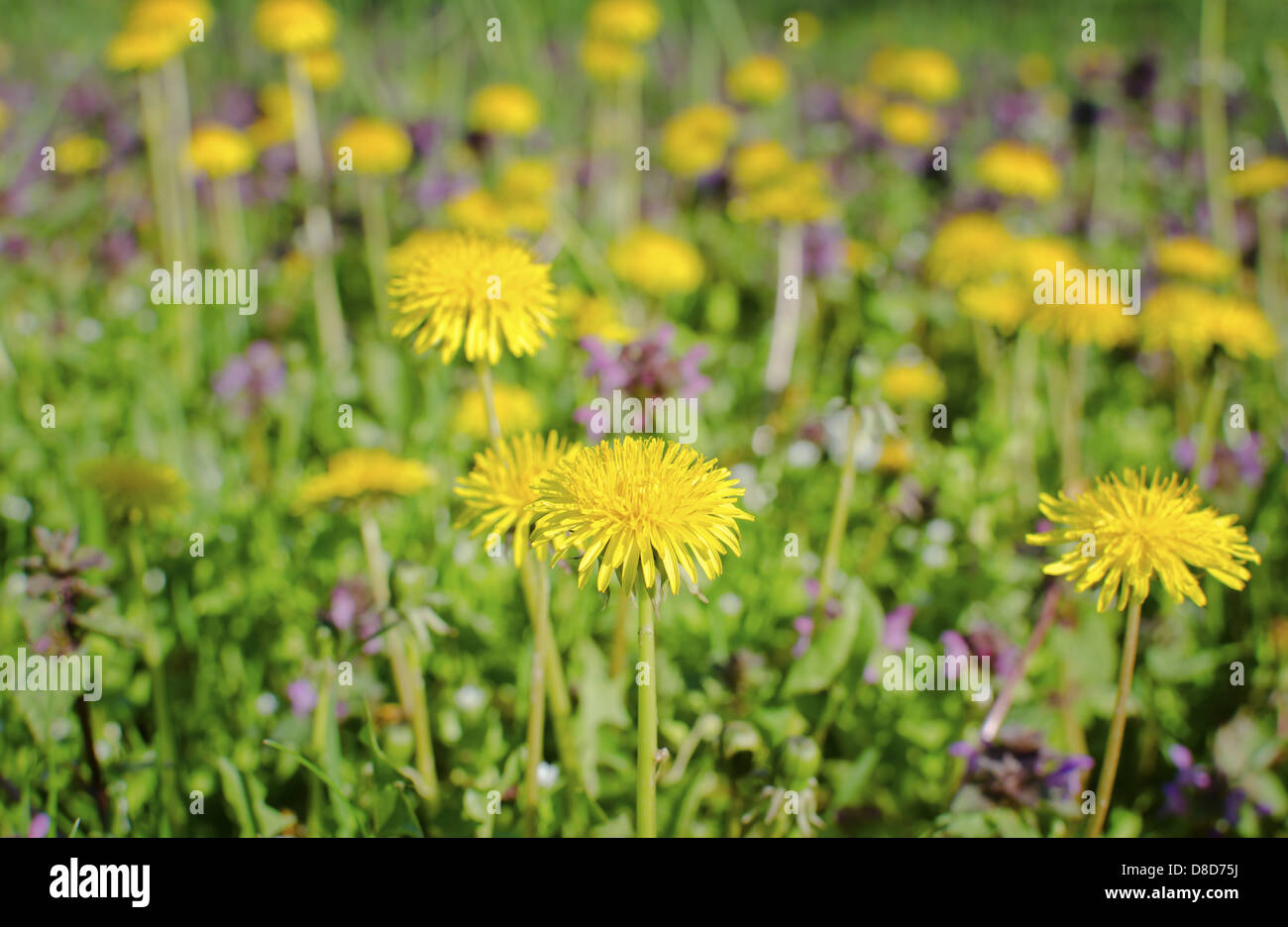 Yellow Flowers Green Pasture In Stock Photos Yellow Flowers Green
