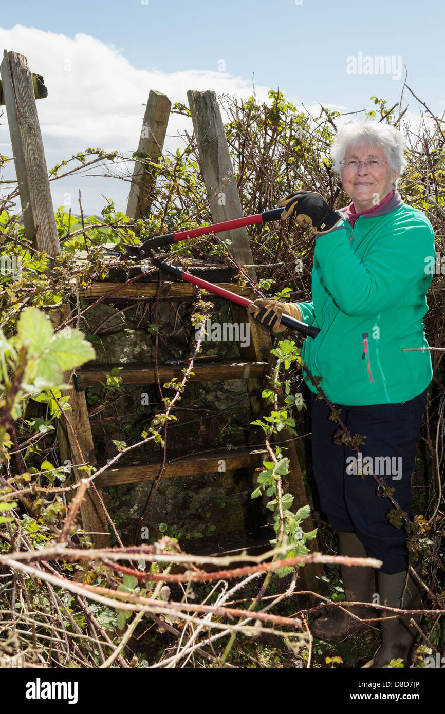 Ramblers footpath volunteer worker clearing a country path and ladder stile blocked with overgrown vegetation. Wales - Stock Image