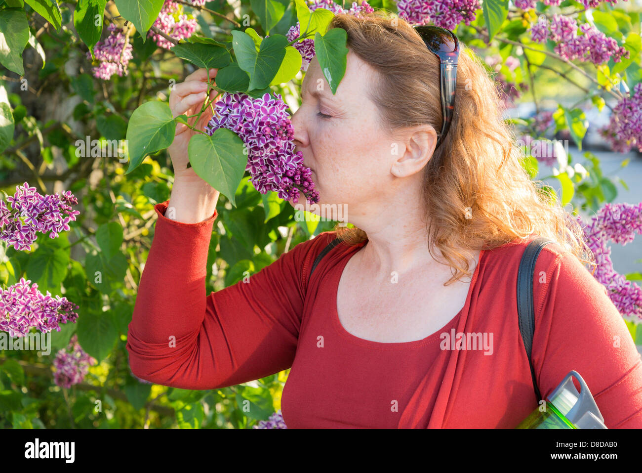 Woman smelling lilac flower - Stock Image