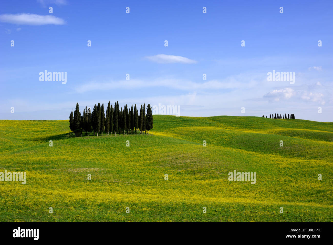 italy, tuscany, val d'orcia, countryside, cypress trees - Stock Image