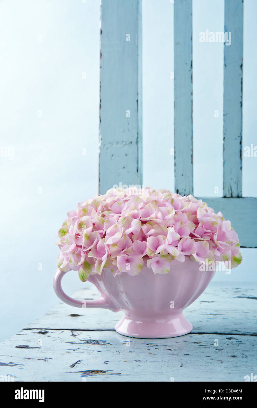 Cup full of pink hydrangea flowers on blue old shabby chic vintage chair - Stock Image