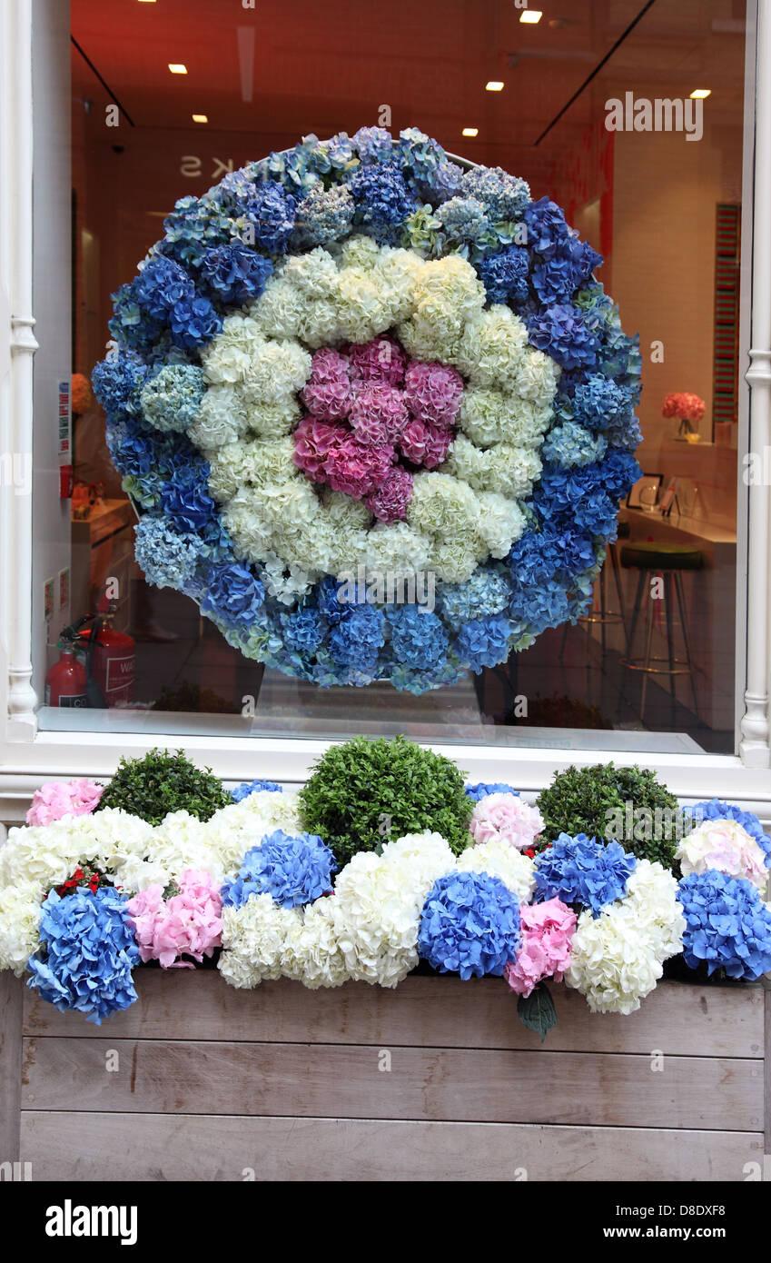 Hydrangea window display and window box, Sloane Square, London SW3 Stock Photo