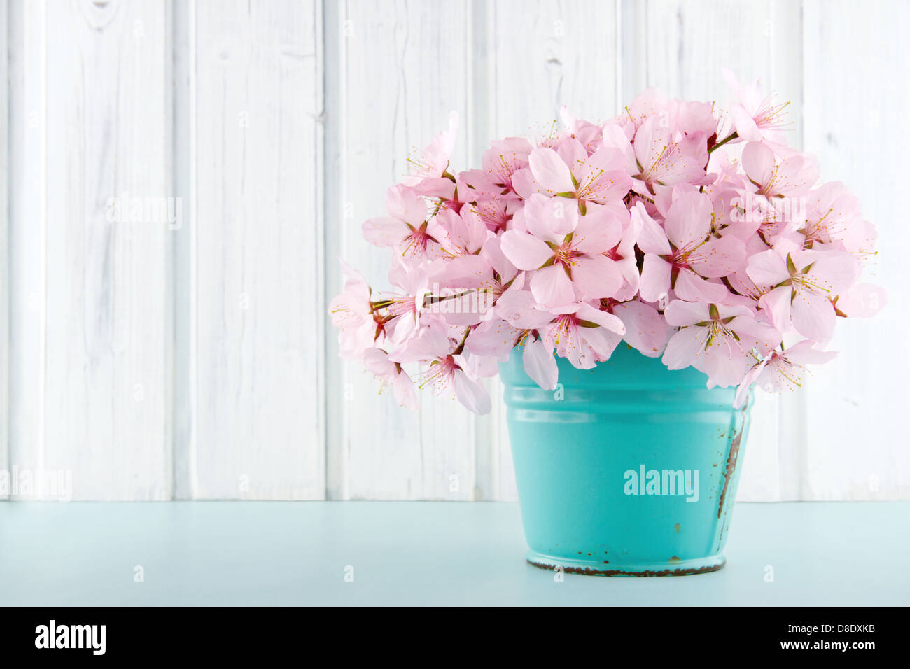 Pink cherry blossom flower bouquet on light blue vintage and white wooden background - Stock Image