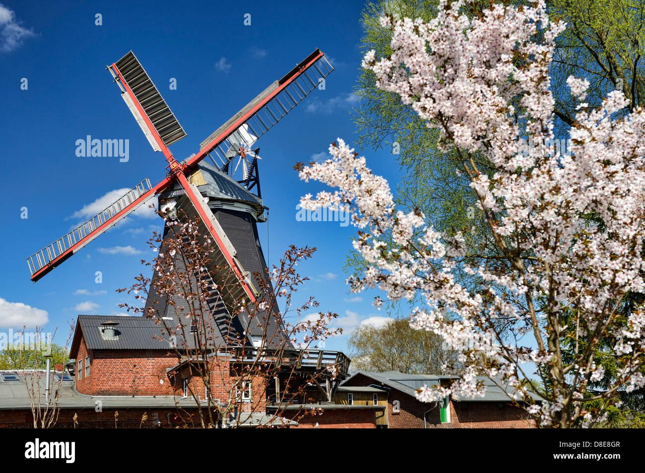 Riepenburger Muehle, mill, Boreas in Kirchwerder, Hamburg, Deutschland, Europa - Stock Image