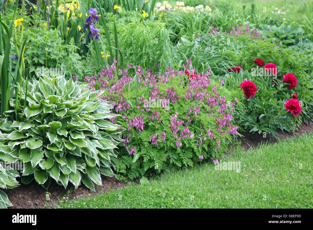 Backyard perennial garden containing late summer flowering stock backyard perennial garden containing late summer flowering perennials mightylinksfo