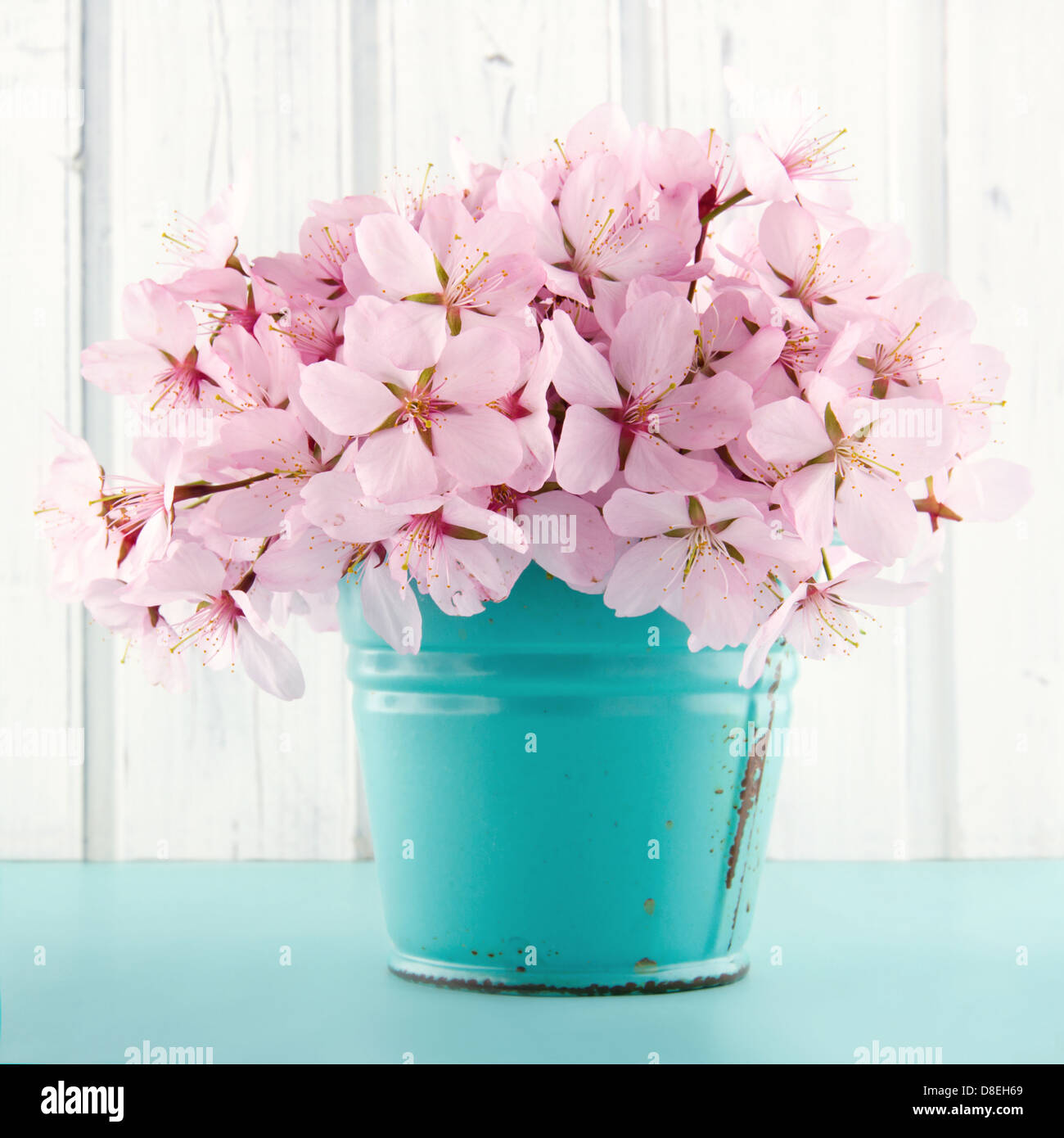 Pink cherry blossom flower bouquet on light blue vintage and white ...